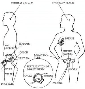 sex diagram sex lesson